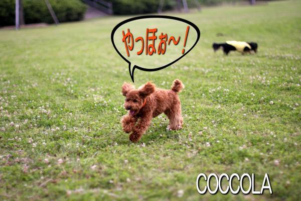 17_20080609211406.jpg
