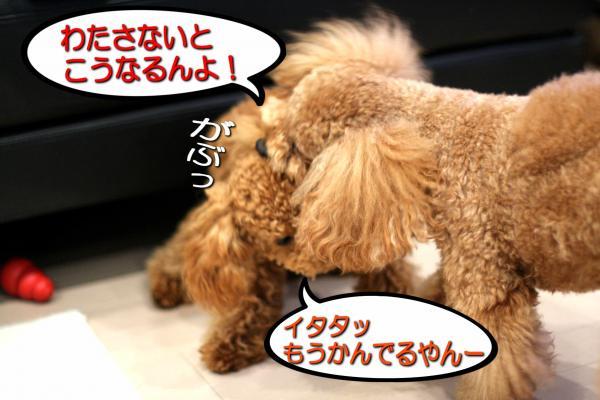 18_20080604181508.jpg