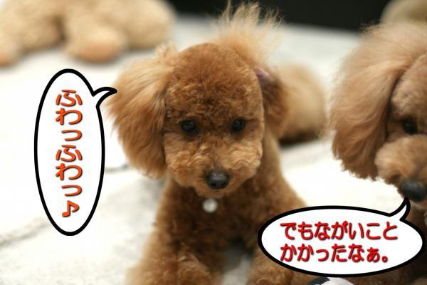 19_20080525145245.jpg