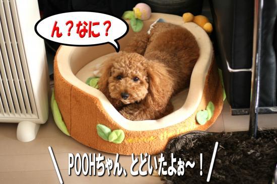1_20080811184854.jpg