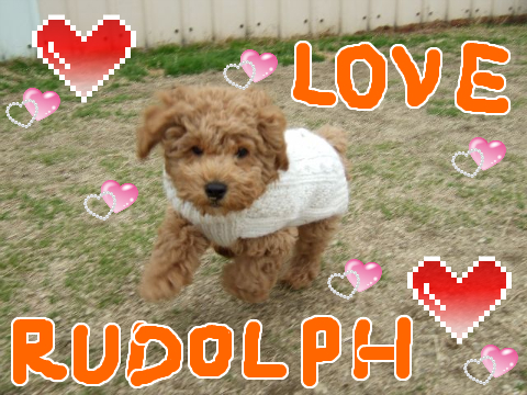RUDOLPH LOVE