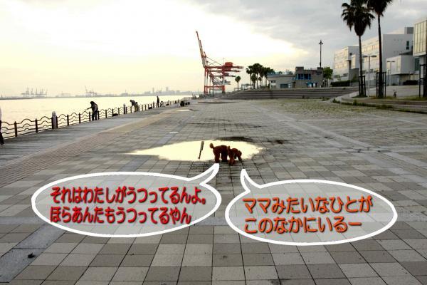 22-2_20080529171007.jpg