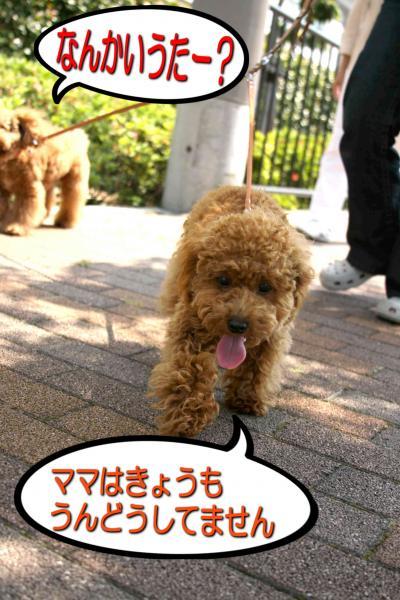 22_20080520193425.jpg