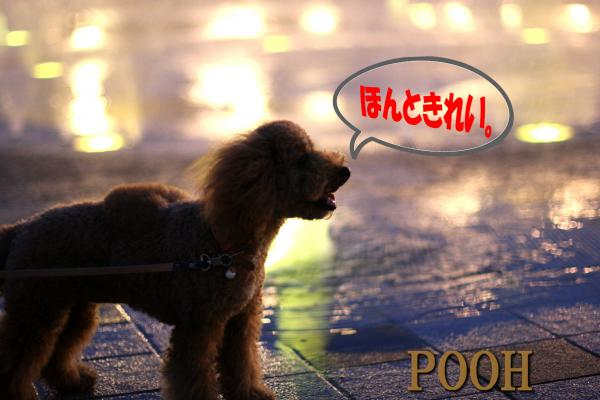 22_20080729181147.jpg