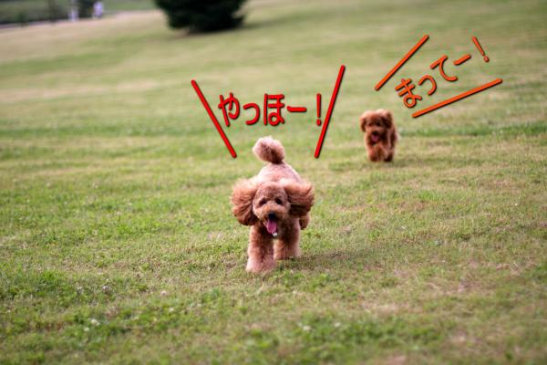 23_20080609211537.jpg