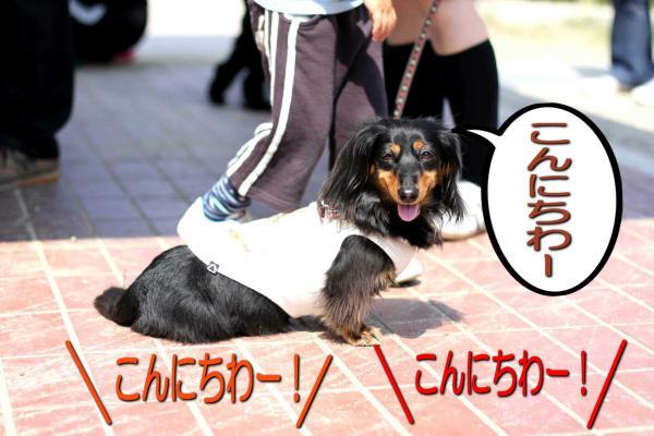 2_20080519171800.jpg