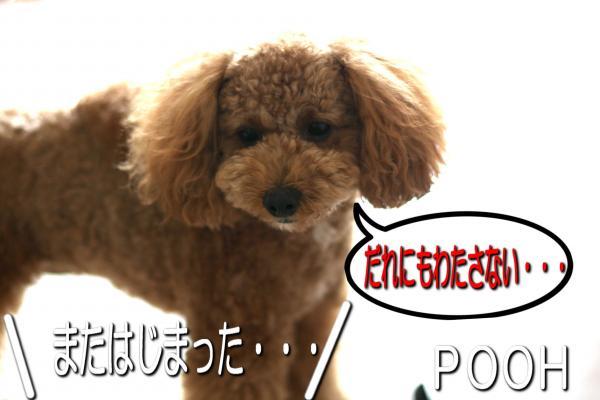 2_20080530172854.jpg
