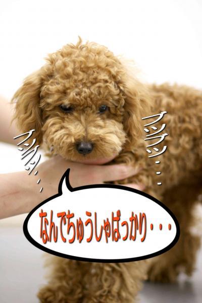 30_20080517143053.jpg