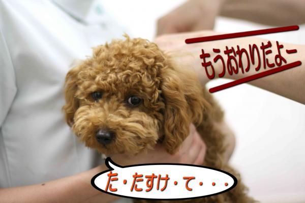 33_20080517143133.jpg