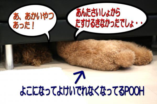 37_20080605195901.jpg