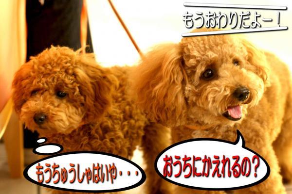 39_20080517143312.jpg