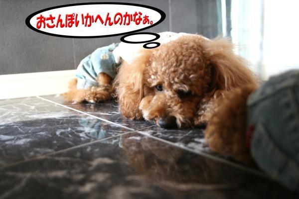 3_20080706131636.jpg