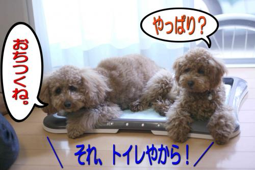 4_20080512224512.jpg