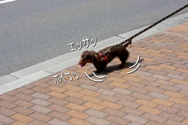 4_20080519172002.jpg