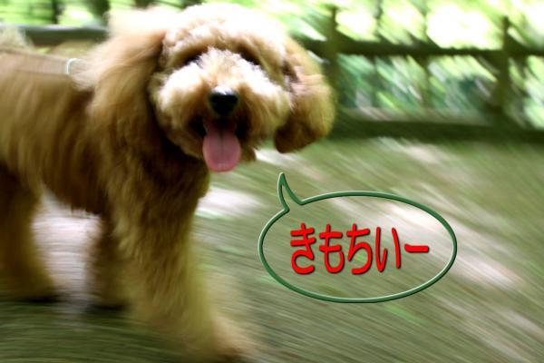 4_20080521193329.jpg