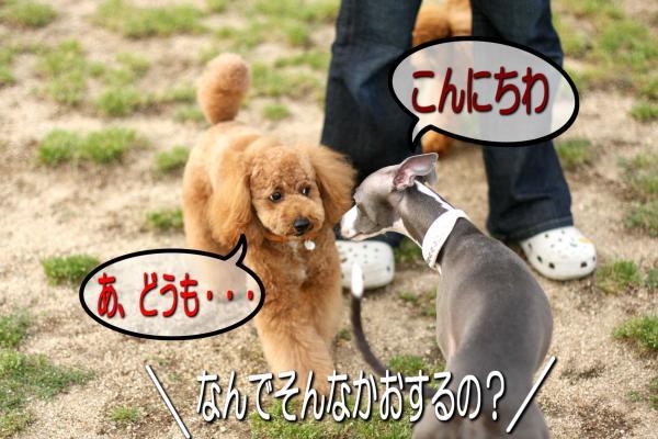 4_20080527141418.jpg