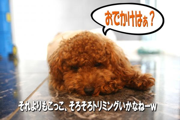 4_20080706131700.jpg