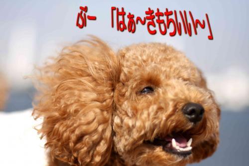 5_20080508184424.jpg