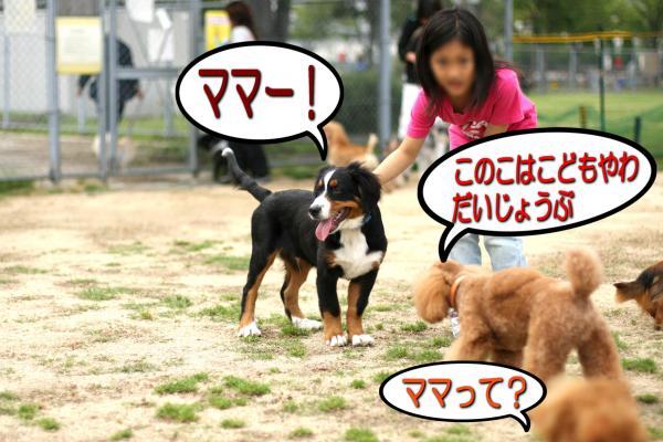 5_20080527141429.jpg
