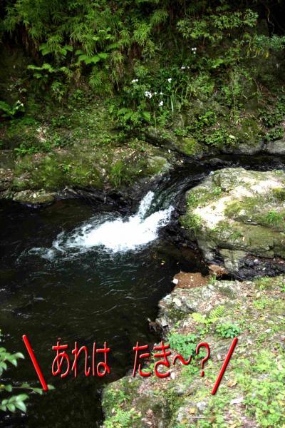 6_20080521193427.jpg