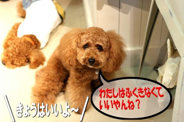 6_20080701220154.jpg