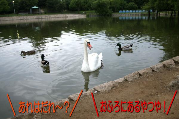 7_20080610184515.jpg