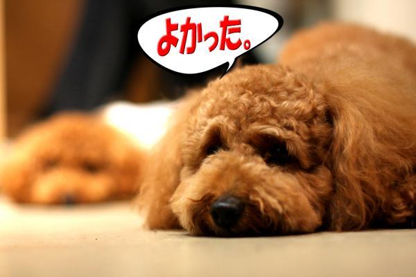 7_20080701220207.jpg