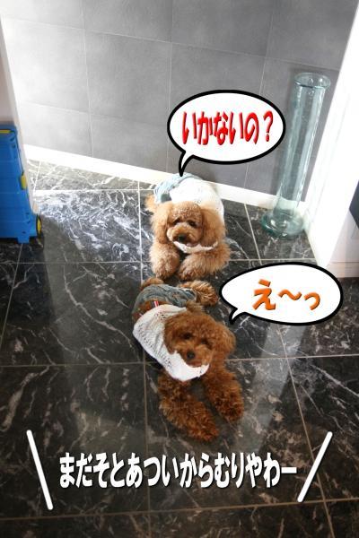 7_20080706132050.jpg