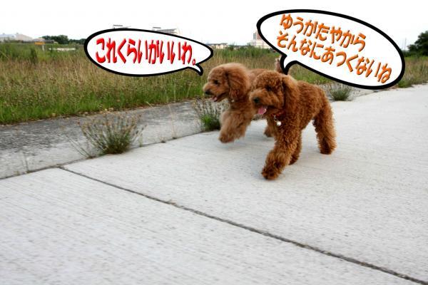 7_20080714170924.jpg