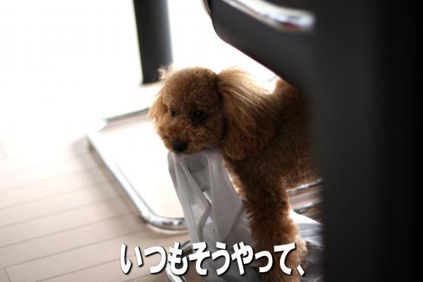 7_20080725173316.jpg