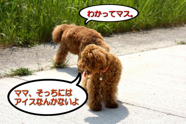 8_20080519172129.jpg