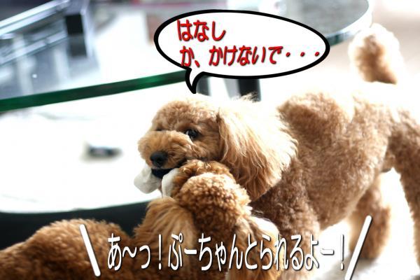 8_20080530173012.jpg