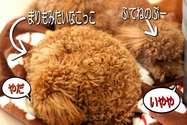 9_20080524162455.jpg