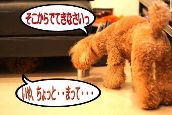 9_20080603191008.jpg