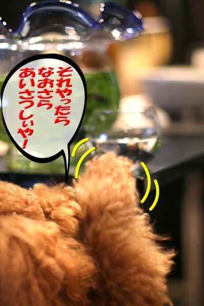 9_20080704174330.jpg