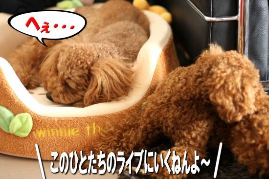 9_20080811185024.jpg