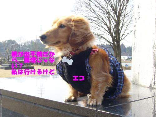 P1040143_convert_20080321172434.jpg