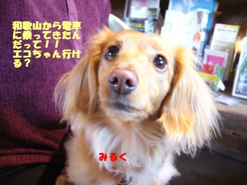 P1040167_convert_20080321172759.jpg