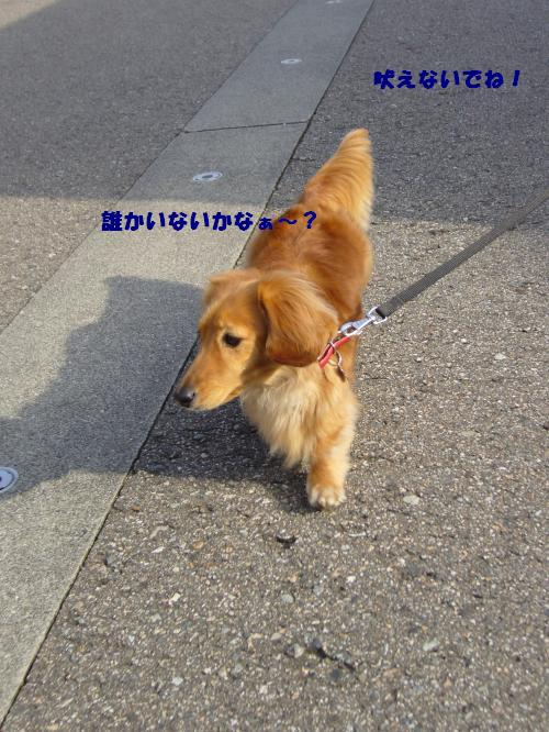 P1040198_convert_20080326104857.jpg