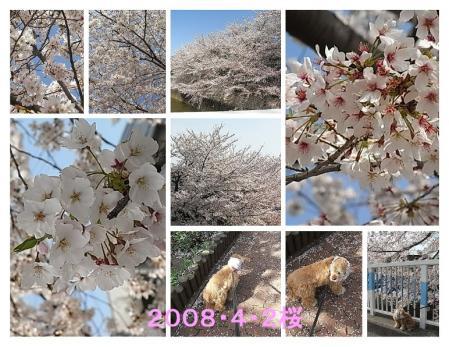 080402sakura2.jpg