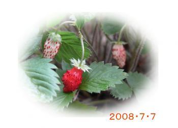 080707strawberry.jpg