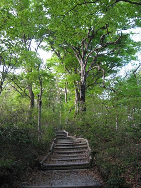 ブナのある階段