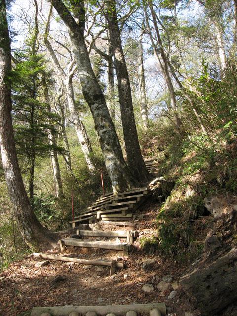 ブナと階段