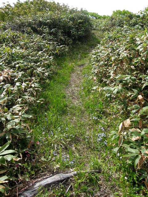 リンドウの小道
