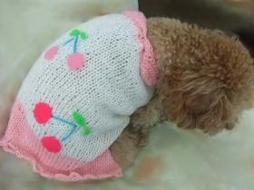 さくらんぼセーター1