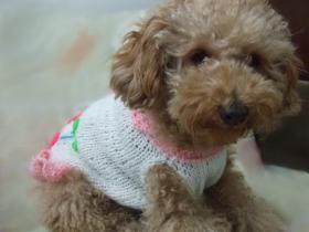 さくらんぼセーター2