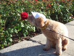 赤いバラにチュ~