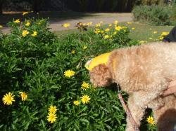 可愛い黄色いお花にもチュ~