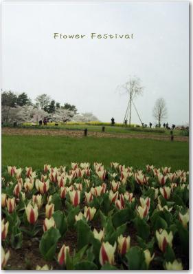 Flower Festival 2008