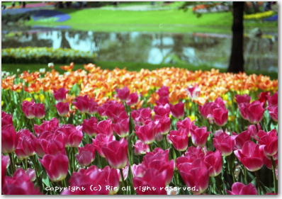 昭和記念公園
